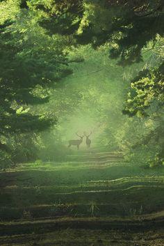 touchdisky:  Wild deer bymatt dinning