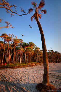 early morning - Hunting Island State Park, South Carolina