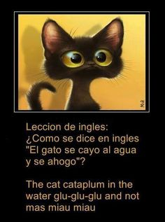 "Leccion de ingles: ¿Como se dice en ingles ""El gato se cayo al agua y se ahogo""? The cat cataplum in the water glu-glu-glu and not mas miau miau"