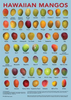 To eat a mango from Hawaii is an amazing experience which can only be compared to heaven. Fruit And Veg, Fruits And Vegetables, Pitaya, Mango Fruta, Mahalo Hawaii, Hawaii Usa, Mango Varieties, Fruit Names, Tropical Fruits