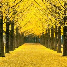 Alan Walker - Faded (Remix) Shuffle Dance Electro House II by cherry ann bandes Nami Island Korea, Beautiful Places, Beautiful Pictures, Yellow Tree, Autumn Park, Autumn Scenery, Sky Garden, Colorful Trees, Green Nature