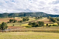 A Super-Unique Wine Tour In The Hunter Valley Wine Country, Country Life, Cow Girl, Frugal, Vineyard, Australia, Tours, Adventure, Unique