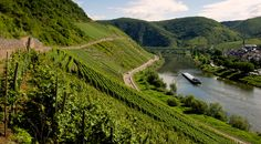 A barge floats down the river moselle