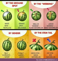 We all want sweeter watermelons, but sometimes you get one so bland and dry. This nifty tip will help you choose the best one at the farmers market! Sweet Watermelon, Good Food, Yummy Food, Cooking Recipes, Healthy Recipes, Healthy Snacks, Food Facts, Baking Tips, Kraut