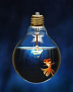 Goldfish in light bulb...what a great idea!