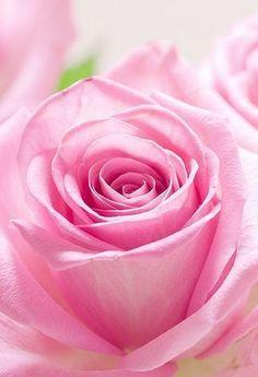 Pink Amazing World beautiful amazing