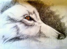 Wolf sketch