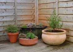 Designing a Small Garden