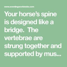 Your horse's spine is designed like a bridge.  The vertebrae are strung together and supported by muscles, similar to the design of a suspension bridge.   When the additional weight of a rider is added, the spine is supported by the back muscles and the abdominal muscles. If these are weak, the danger increases of... Read more »