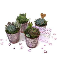 Bridesmaids Gifts, Set of Small Succulent Arrangements in Rose Gold Mercury Glass Pots and Wrapped in Gift Box, Birthday,Succulents Gift Box Leaf Flowers, Hibiscus Flowers, Valentine Day Cards, Valentines, Strawberry Leaves, Lavender Blossoms, Butterfly Pea Flower, Organic Herbal Tea, Succulent Gifts
