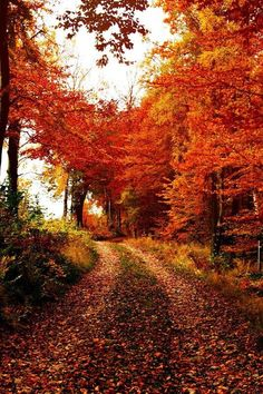 Autumn forest trails