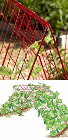 Double-Panel Trellis Keeps Cucumbers Straight and Blemish-Free. Well why did I never think of growing cukes on a cage or trellis? Herb Garden Pallet, Garden Arbor, Garden Trellis, Lawn And Garden, Vegetable Garden, Farm Gardens, Outdoor Gardens, Organic Gardening, Gardening Tips