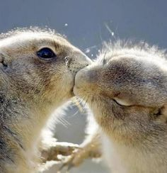 Kissing Squirrels. This is the cutest thing.