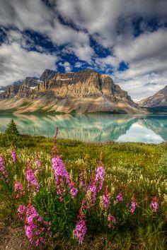 Bow Lake, Lake Louise, Alberta Copyright: Paul Goodwill