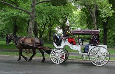 Central Park Horse Carriage, New York - cause it makes me feel like Royalty to be pulled in a horse-drawn carriage ;)