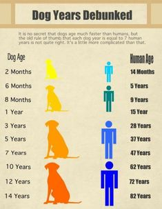 Dog Years Debunked: Purrfect pet health and beauty tips Dog Health Tips, Pet Health, Baby Health, Dog Care Tips, Pet Care, Pet Dogs, Dogs And Puppies, Pet Puppy, Dog Ages