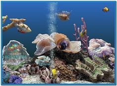 Download realistic aquarium for mac