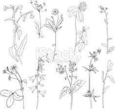 Set of line drawing herbs Lizenzfreie Vektorillustrationen