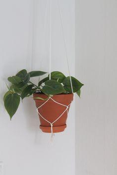 Hanging pothos plant for corner of kitchen in front of sliding doors. Possibly use hemp string to make hanger. I have extra hemp string. ($0)
