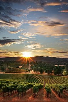 Explore wine country and taste all the best wines in Napa Valley.  While you're here, stay with us in Sonoma, a great little wine country town. El Dorado Hotel and Kitchen will take care of every detail for the perfect vacation!  http://eldoradosonoma.com/