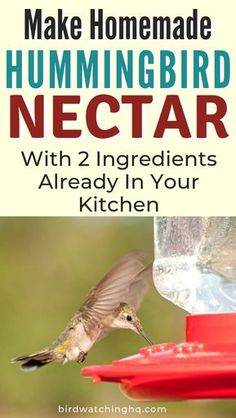 The 2020 Hummingbird Food Guide (Easy Nectar Recipe + FAQ) Learn the simple hummingbird nectar recipe you should be using today! Make delicious hummingbird food in under 5 minutes w/ two ingredients. Homemade Hummingbird Nectar, Homemade Hummingbird Food, Recipe For Hummingbird Nectar, Hummingbird Feeder Recipe, Hummingbird Cupcakes, Sugar Water For Hummingbirds, How To Attract Hummingbirds, Baby Hummingbirds, Hummingbird Plants