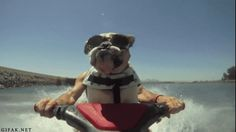 who let the dogs out... to jet ski?!