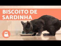 How to Cook fish for Cats - Homemade cat treats Cat House Diy, Cat Treats, Diy Stuffed Animals, Cat Food, Dog Food Recipes, Dog Cat, Homemade, Dogs, Kitty Cats
