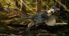 The newly described dinosaur Zhenyuanlong suni measured 5 feet in length and was a relative of the velociraptor. The fossil's well-preserved wings bore complex feathers, not simple hairlike structures. Illustration by Zhao Chuang.