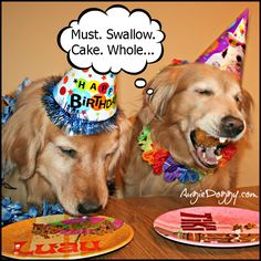 Golden birthday party ;-)  www.AugieDoggy.com/apps/blog