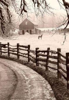 Winter Storm, Celeiro, & cavalo no Barnyard por kelly.meli