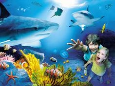 How to get the best Sea Life centre offers You are in the right place about Sealife aquarium Here we offer you the most beautiful pictures about the Sealife animals you are looking for. When you exami Blackpool, Sea Life Centre Birmingham, Underwater Pictures, Great Days Out, Green Turtle, Family Days Out, Local Attractions, Hai, Photos