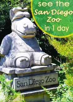 The San Diego Zoo is known for it's substantial size, but there is a way to see the whole zoo in one day!