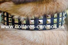 Collar de tachuelas para perros grandes y fuertes Cane Corso diseño elegante cuero y metal - S45