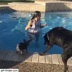 37 ideas for funny dogs swimming smile Cute Funny Animals, Funny Animal Pictures, Funny Cute, Funny Dogs, Funny Chihuahua, Hilarious, Super Funny, Cute Puppies, Cute Dogs