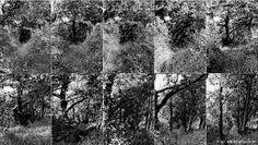 Jan Hendrix. Drawing the distance Screenprint on aluminium