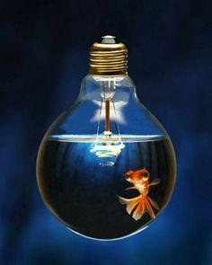 Get Fishy with the Light Bulb Fish Tank :-))) Light Bulb Fish, Light Bulb Art, Sutra, Diy Zimmer, Photoshop, Gifs, Creativity Quotes, Gif Animé, Pics Art