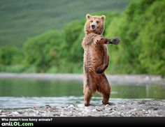 Funny pictures about Sexy bear. Oh, and cool pics about Sexy bear. Also, Sexy bear photos. Photo Ours, Photo Humour, Animal Pictures, Funny Pictures, Funniest Pictures, Funny Pics, Funny Stuff, Funniest Quotes, Humorous Quotes