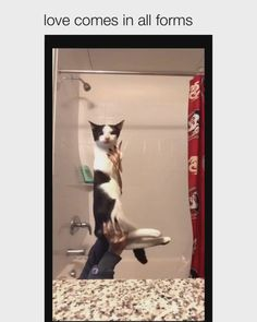 Crazy Funny Videos, Crazy Funny Memes, Really Funny Memes, Funny Relatable Memes, Cute Little Animals, Cute Funny Animals, Funny Cute, Cute Cats, Hilarious