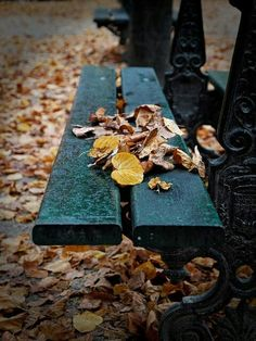 Greeb bench and autumn leaves, Paris Autumn Cozy, Soft Autumn, Autumn Trees, Autumn Leaves, Sky Brown, Blue Brown, Parisienne Style, I Love Paris, Autumn Inspiration