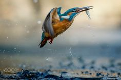 fishing time by RiccardoTrevisani #animals #animal #pet #pets #animales #animallovers #photooftheday #amazing #picoftheday