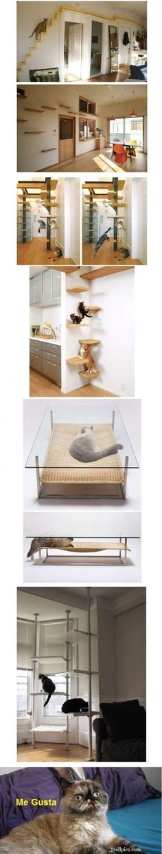 Crazy cat lady playhouse! This is the coolest thing ever!  yeah sorry benj im not turning my house into benjiland.too much