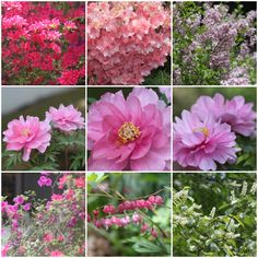 """Weekly Photo Challenge: Jubilant - Spring to summer garden flora """"We should be jubilant about our successes but not to the point we get reckless or careless."""" Bob Bonde"""