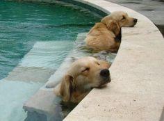 Sleeping in the pool.