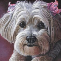 Daisy Painting by Steven Tetlow - Daisy Fine Art Prints and Posters for Sale