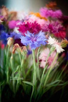 Fleurs des champs en Paintography. Magnifique ! Du blog : http://www.naturephotographie.com