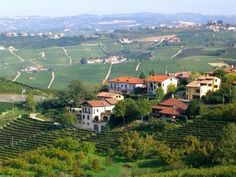 Piedmont/Barolo, Italy. Beautiful countryside and AMAZING wine!
