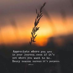 Appreciatr where you are in your journey, even if it's not where you want to be. Every season serves its purpose. - Idil Ahmed