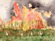 Burning Cane - Watercolor, Heather Torres
