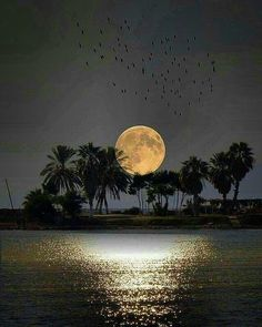 """She used to tell me that a full moon was when mysterious things happen and wishes come true. Moon Images, Moon Photos, Full Moon Pictures, Shoot The Moon, Moon Photography, Good Night Moon, Beautiful Moon, Moon Art, Nature Pictures"