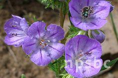Native Plant Society of British Columbia | Photo Gallery
